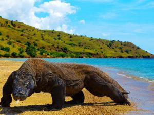 Pulau-Komodo-4